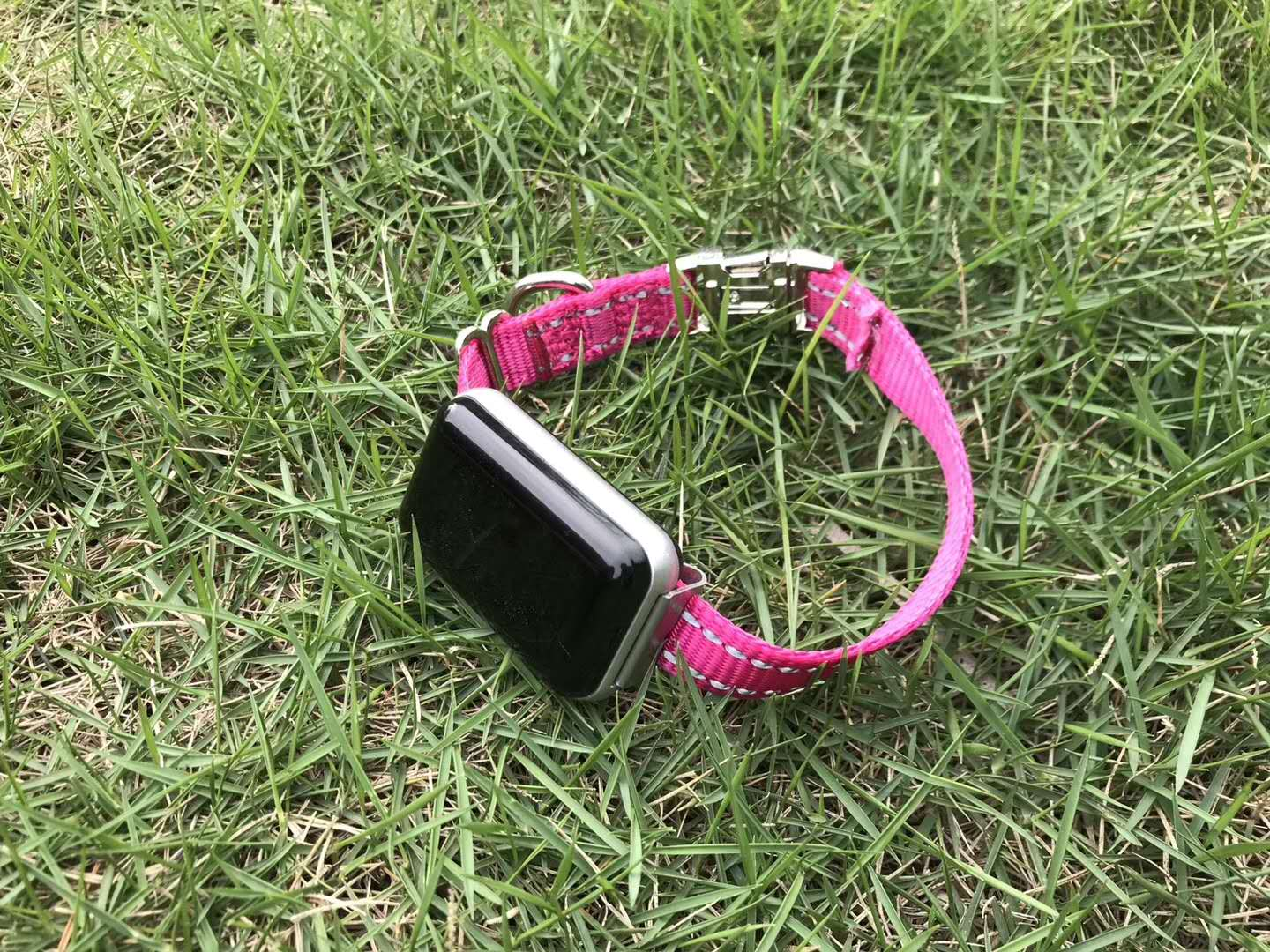 balise gps pour animaux